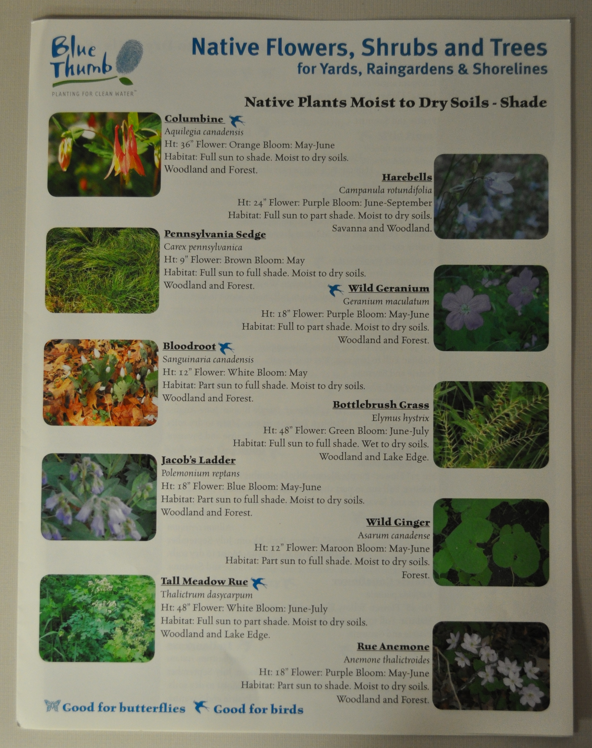 native plant fact sheet