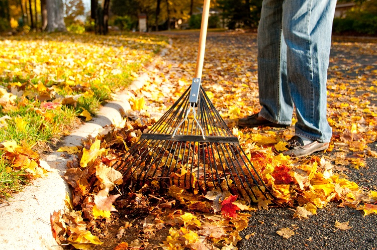 Raking leaves up from street