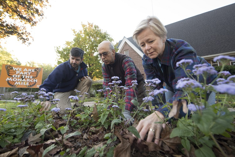 3 Master Water Stewards working in pollinator garden