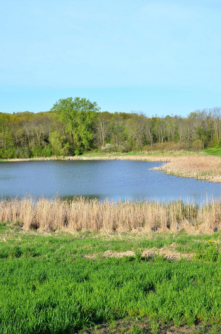 A shallow lake in the Six Mile - Halsted Bay Subwatershed