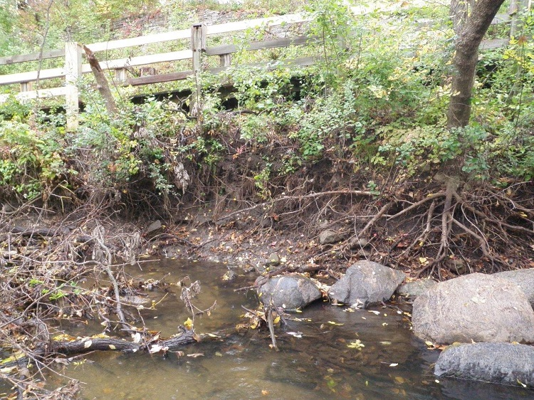 Erosion along Minnehaha Creek streambank