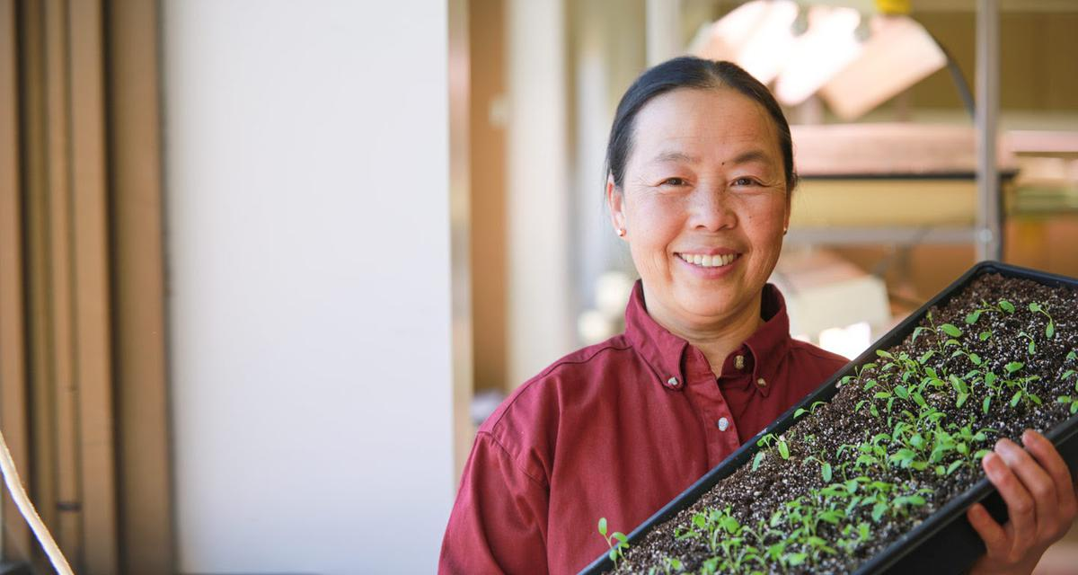 May Lee holding tray of seedlings