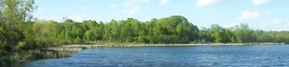 Carver Wetland
