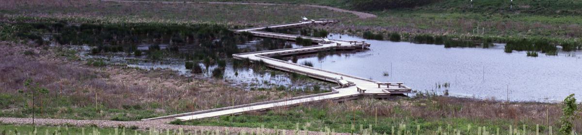 Spring Peeper Meadow Project