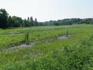 Vegetation near Steiger Lake