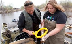 Two researchers looking for a tag on a carp