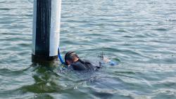 Snorkeler in the water looking for zebra mussels